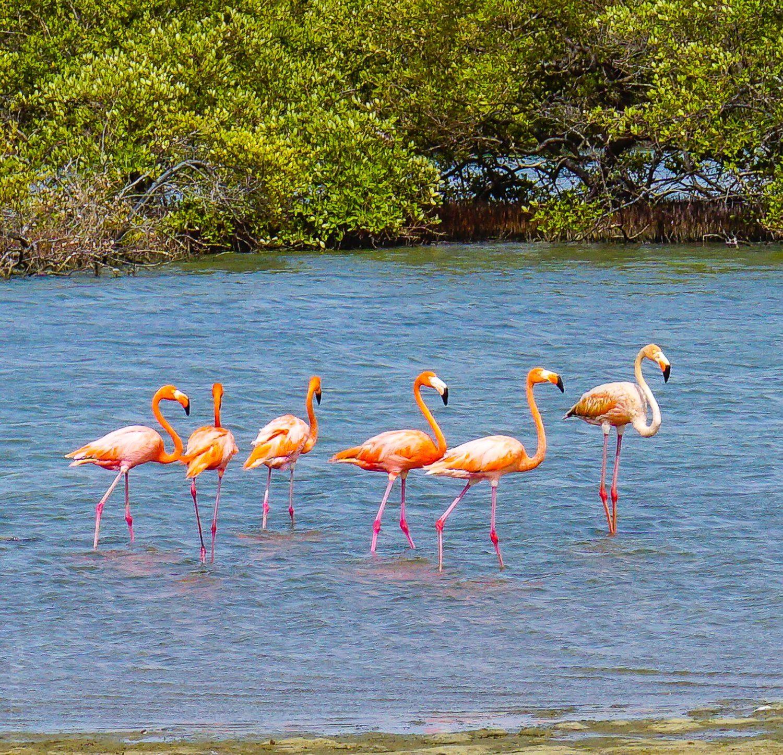 Flamingo conga line!