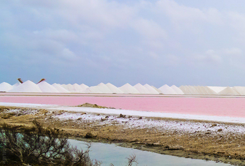 Bonaire's famous pink salt flats.