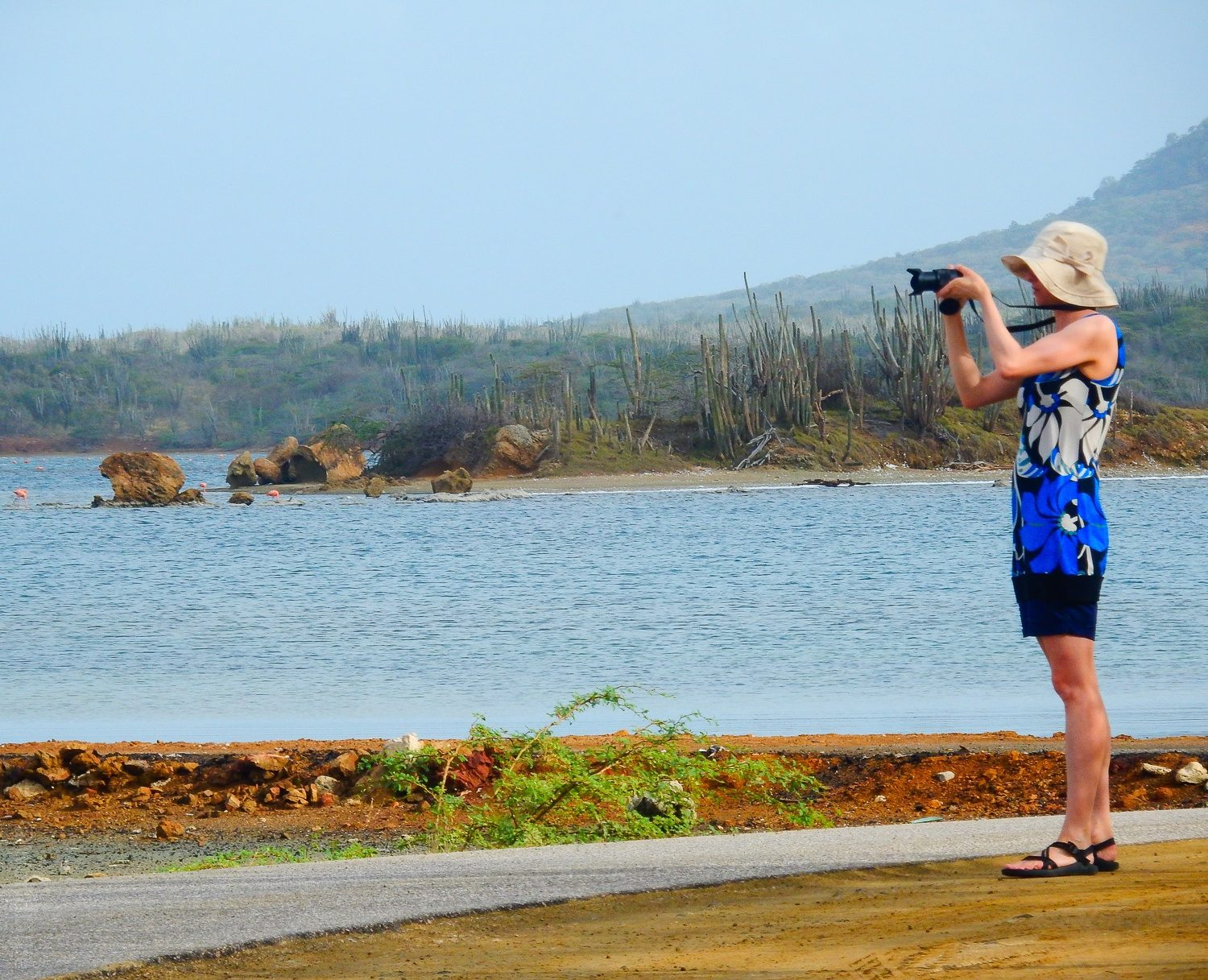 Me photographing flamingos, entranced by their dance.