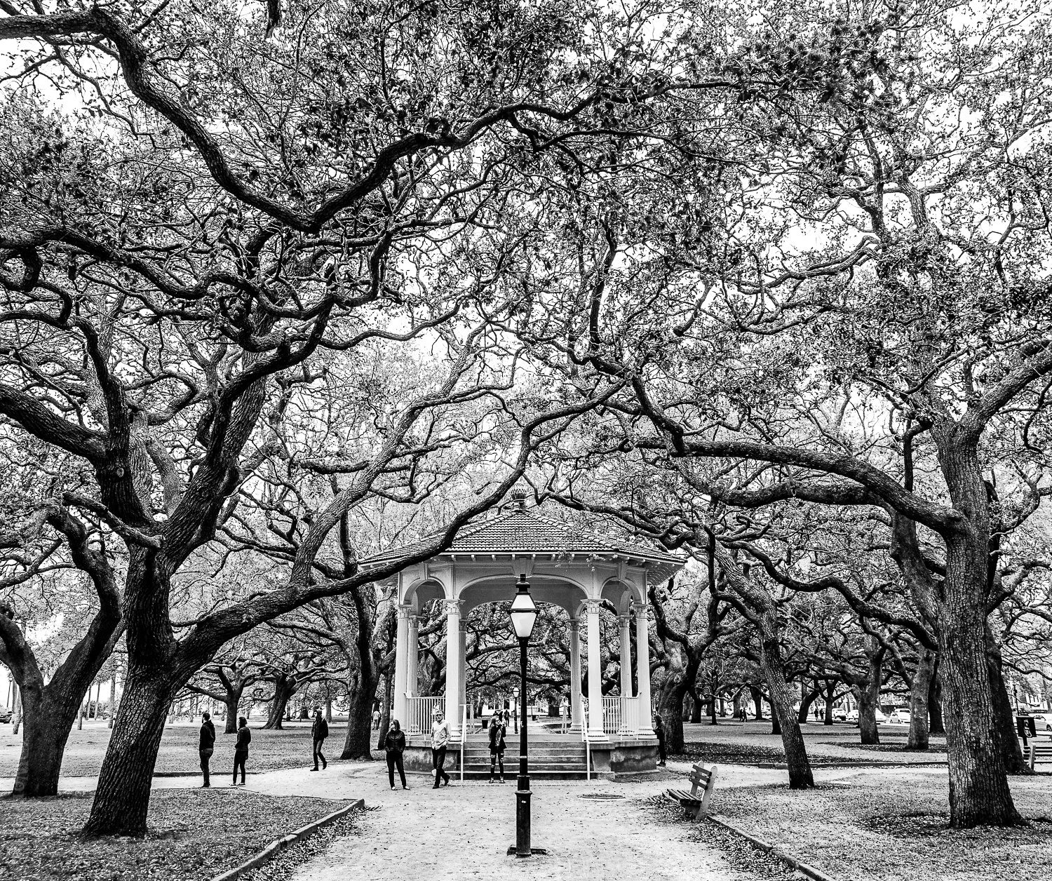 Beautiful White Point Gardens in black and white.