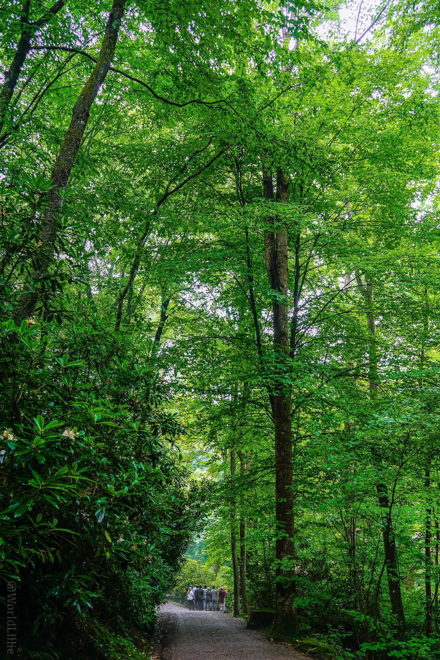Fallingwater trees
