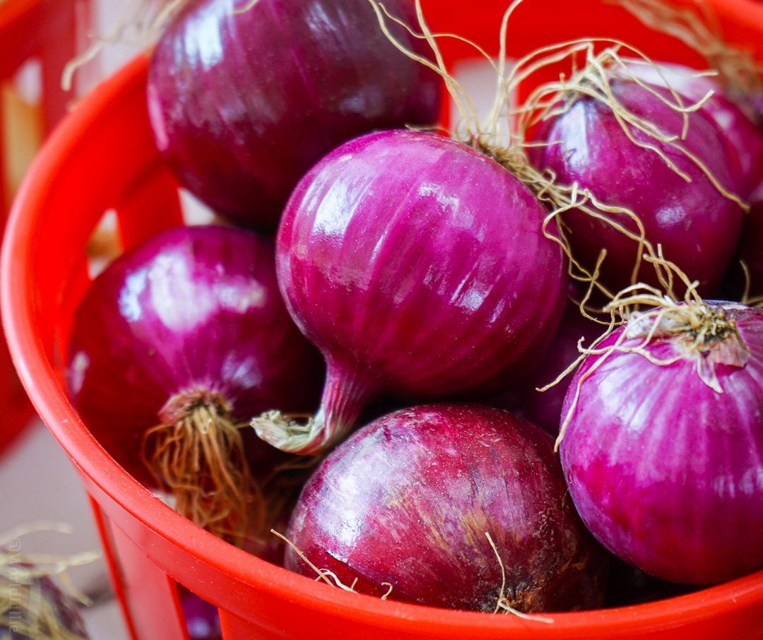 Perfect red onions with spiky frizz hair.