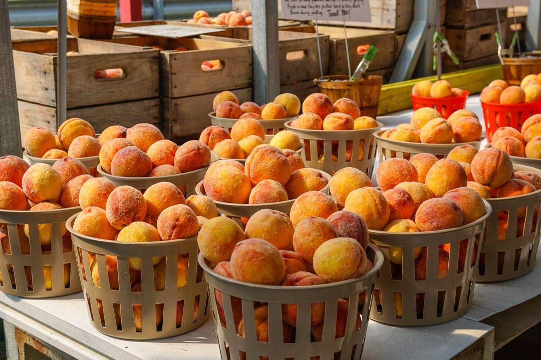 Fresh peaches as far as the eye can see!