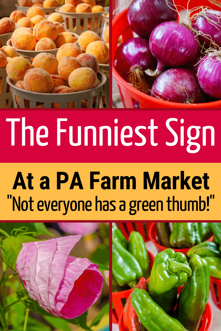 A hilariously funny sign in a southwest PA farm market about how not everyone has a green thumb with plants! If you're near Pittsburgh, Pennsylvania or the Laurel Highlands, this fresh produce stand is worth a visit. #Funny #Farm #GreenThumb #Plants #Gardening #Peaches #Pittsburgh #Pennsylvania #LaurelHighlands