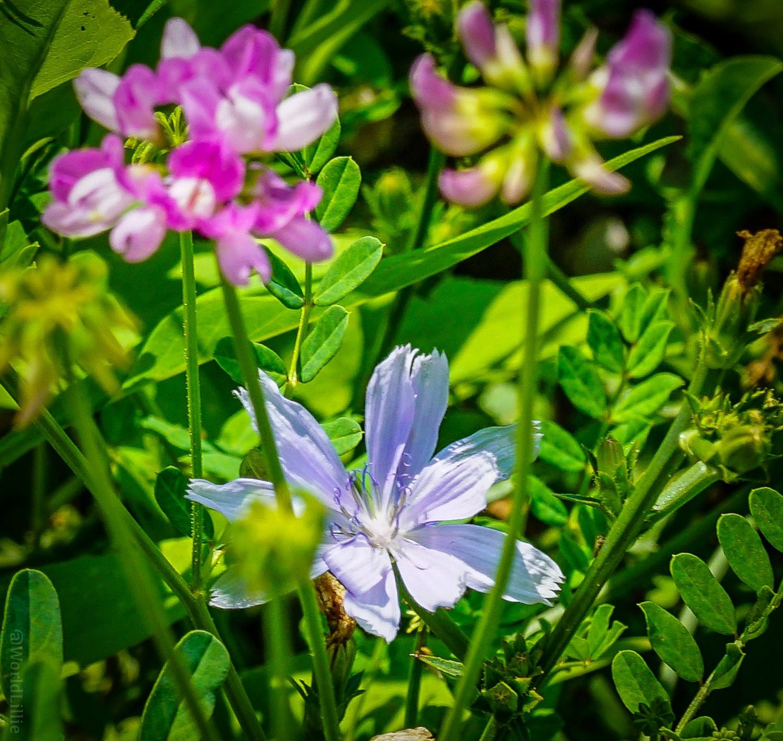 Flowers bursting forth in the Laurel Highlands.