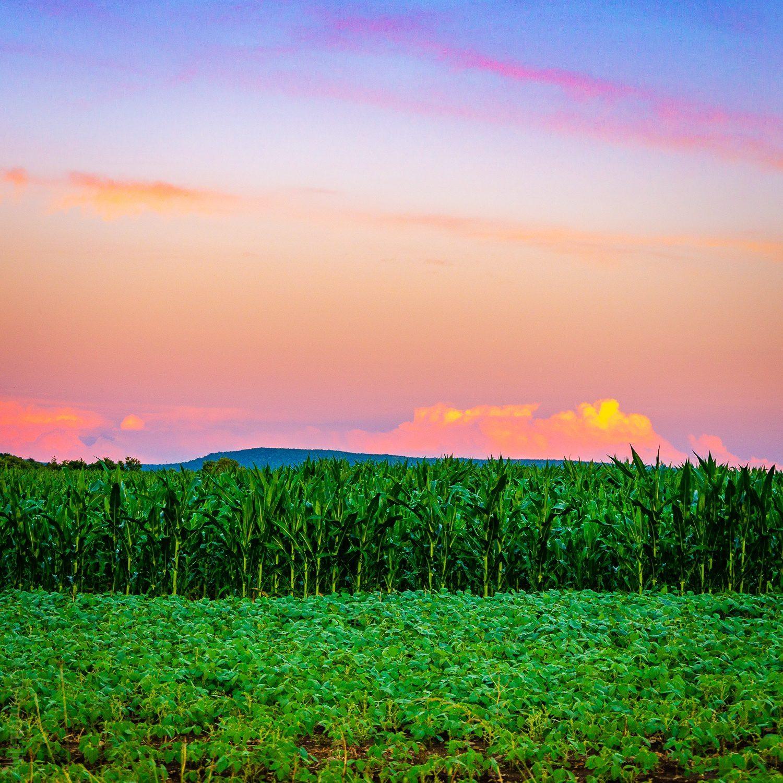 Emerald green fields and a sunset starting.