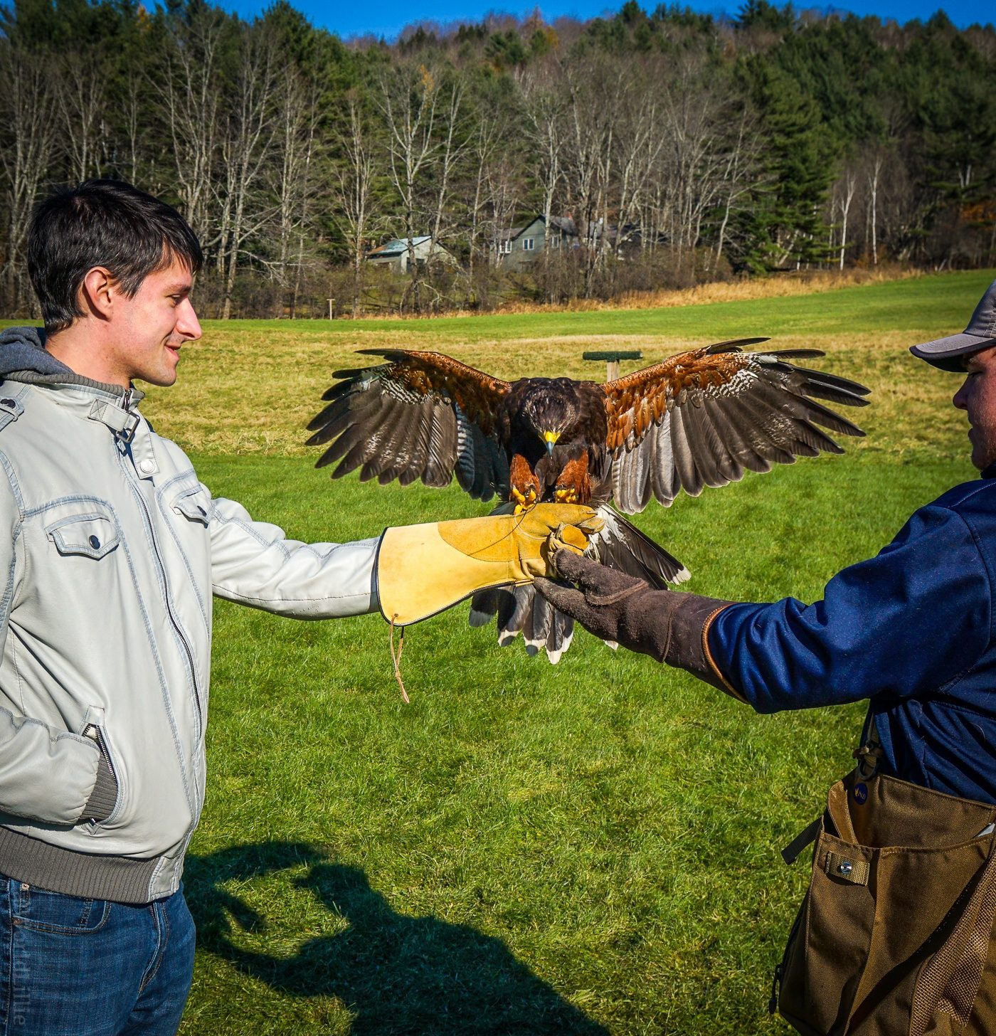 New England Falconry in Woodstock, VT!