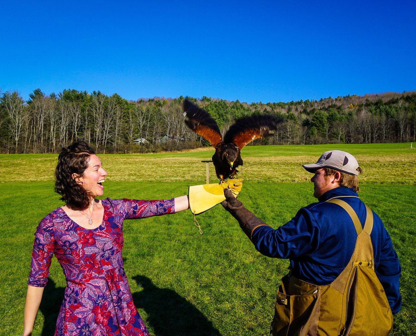 New England Falconry with the Woodstock Inn in Vermont