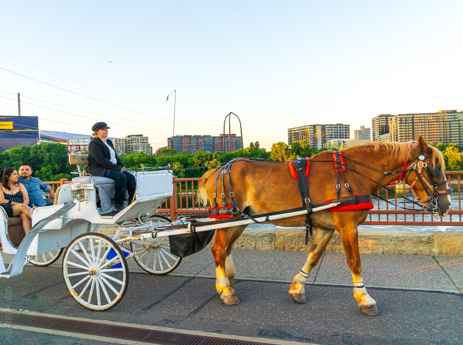 Horse and buggy ride Minneapolis
