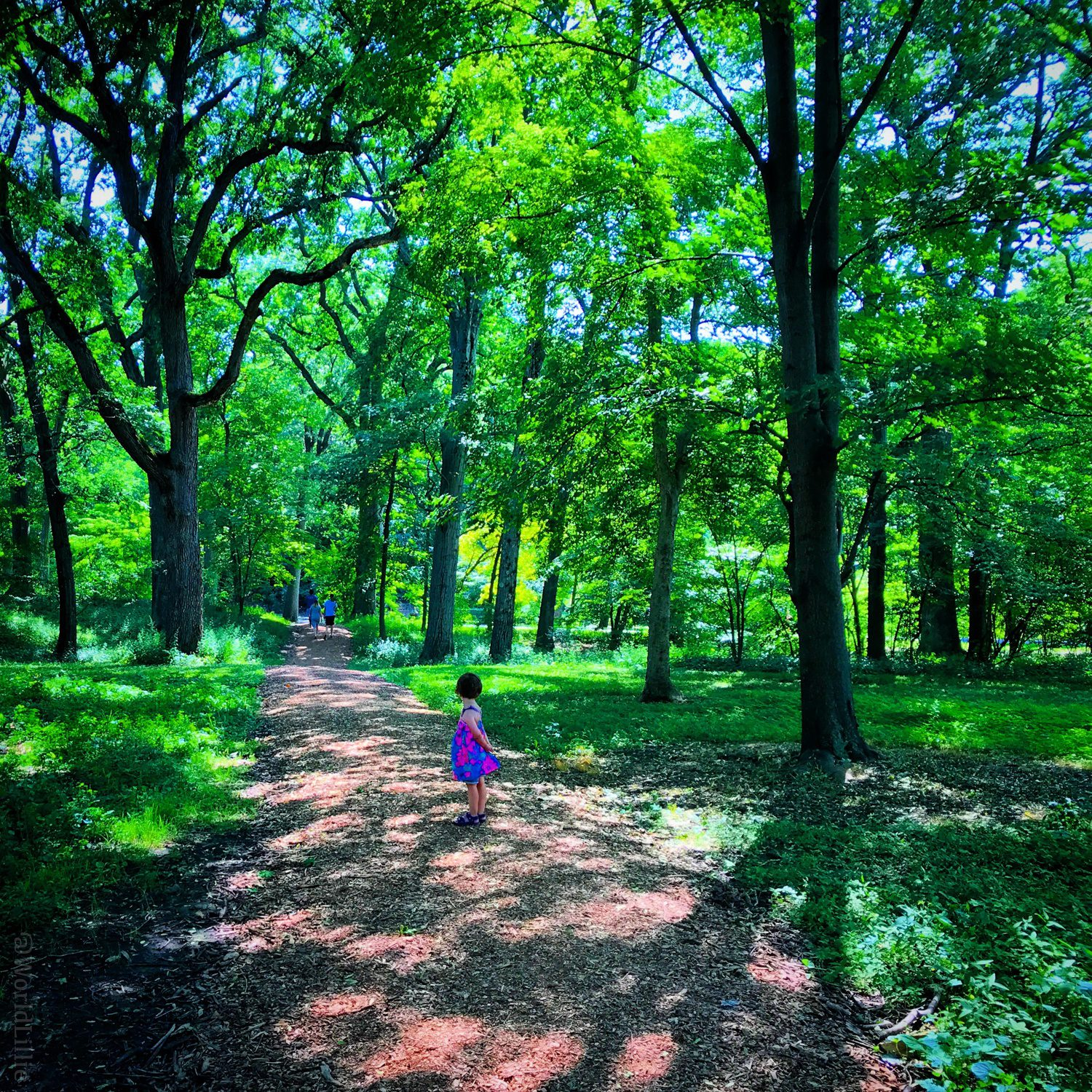 Walking in nature is another form of therapy.