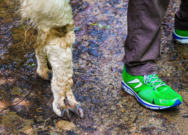 llama foot