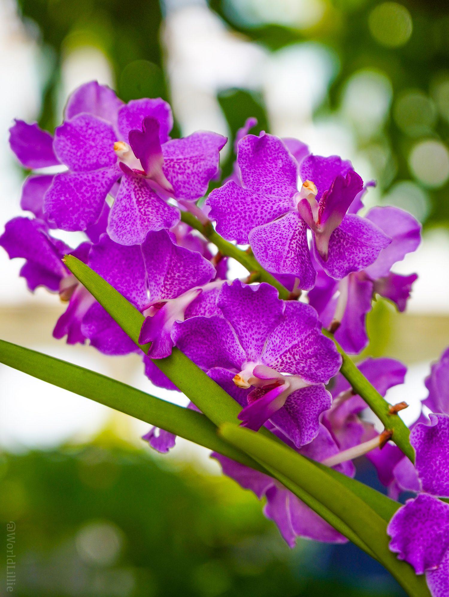 Graceful violet flowers.
