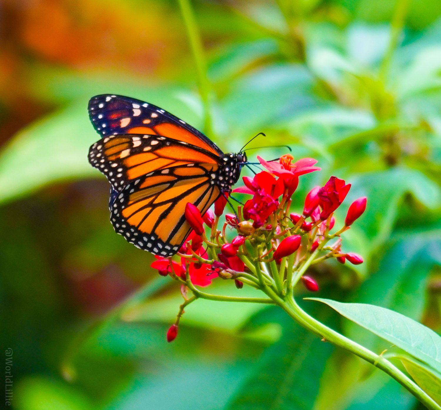 Step in to a world of butterflies and flowers.