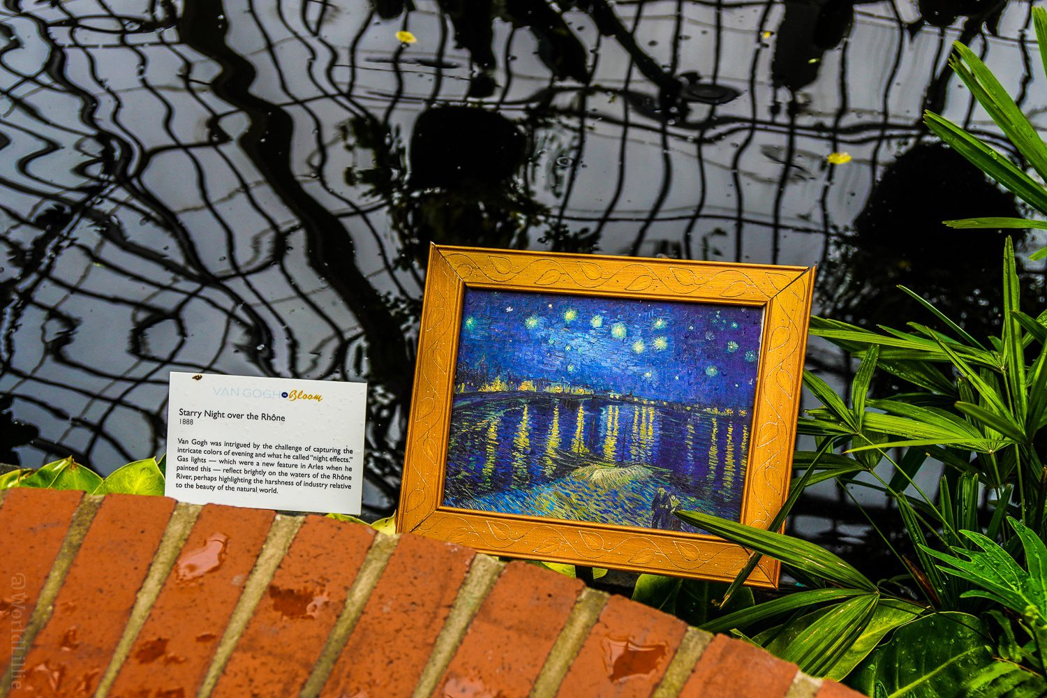 "Here it is: ""Starry Night Over the Rhone."""