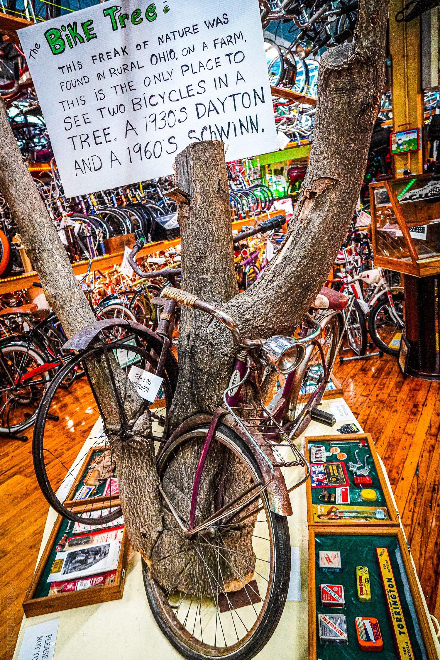 The tree that ate two vintage bikes!
