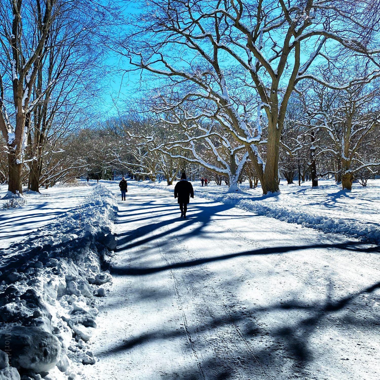 Snow path with tree shadows