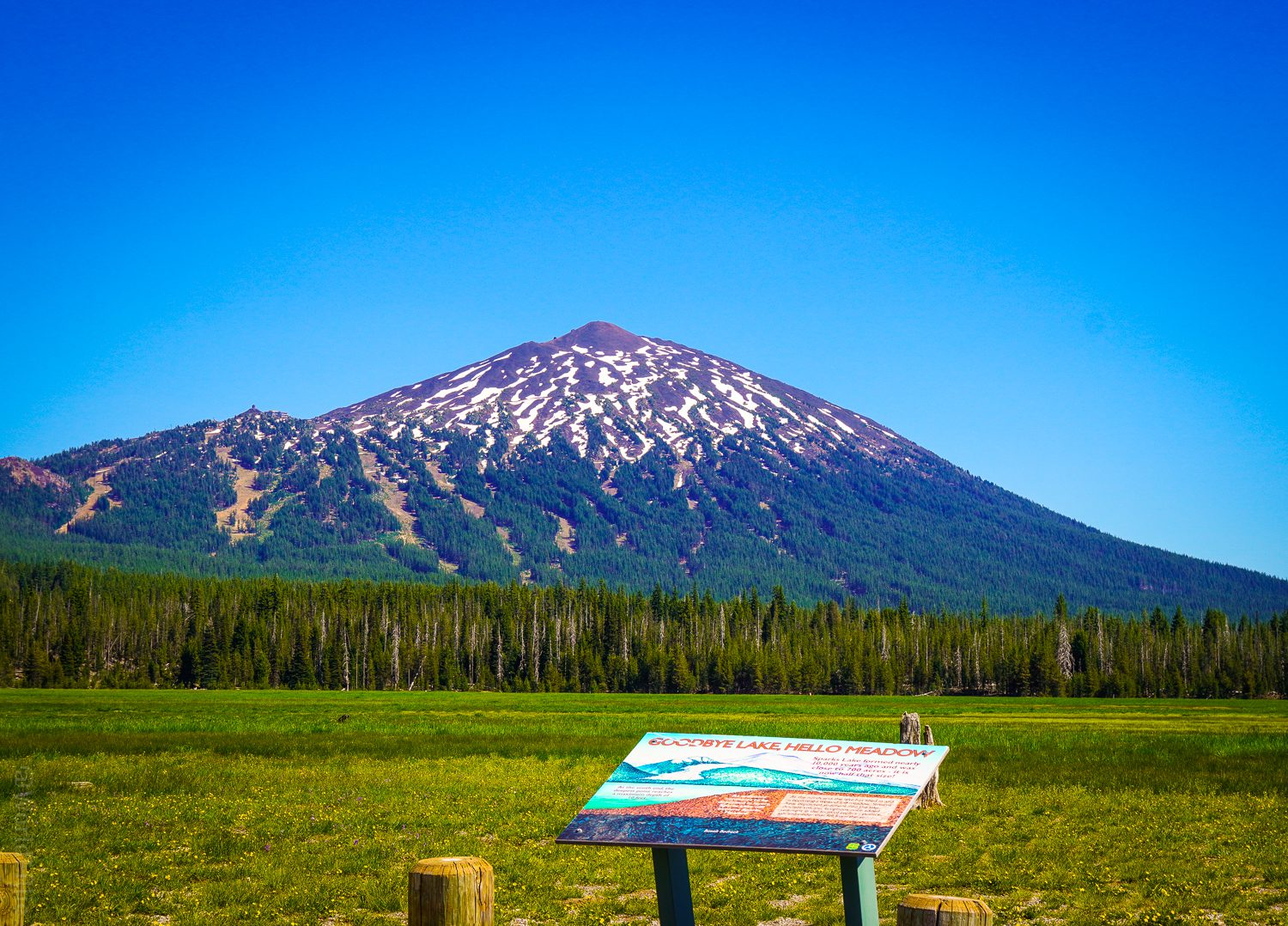 The meadow by Mount Bachelor.